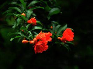 Cảm nhận về bài thơ Cảnh ngày hè (Bảo kính cảnh giới) của Nguyễn Trãi