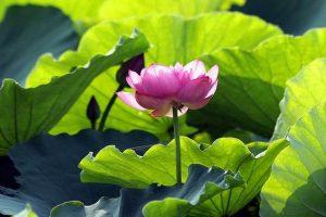 Cảm nhận về bài thơ Cảnh Ngày Hè của nhà thơ Nguyễn Trãi cực hay