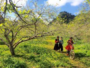 Cảm nhận về bài thơ Việt Bắc của nhà thơ Tố Hữu cực hay