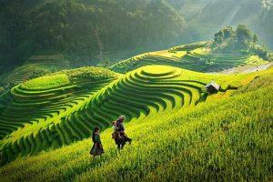 Phân tích 8 câu thơ đầu bài thơ Việt Bắc của nhà thơ Tố Hữu cực hay
