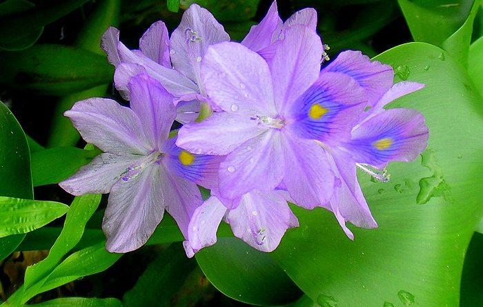 Phân tích tác phẩm Mùa Xuân Nho Nhỏ của nhà thơ Thanh Hải cực hay